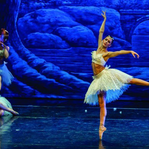 Il lago dei cigni - Teatro Duse Bologna